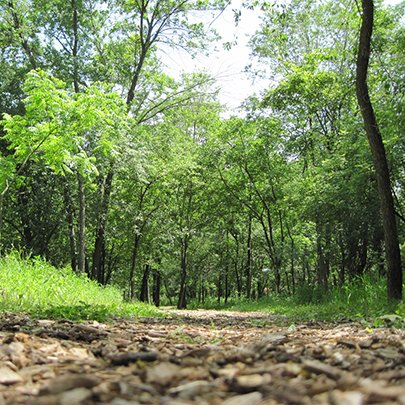 """Post-Covid Spirituality: A Deep Dive into the Wider """"We"""" Retreat at Prairiewoods"""